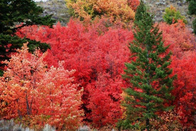 Farbflash für den Herbst – tolle Nägel mit Ionic Jewels